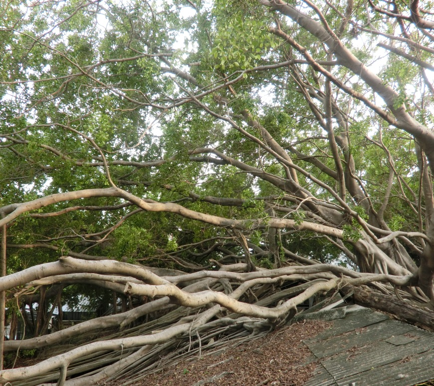 taiwan-travel-anping-tree-house-10